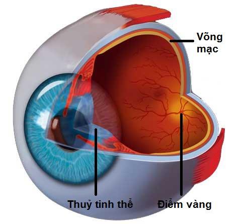 Mắt đục thủy tinh thể, thoái hóa điểm vàng là 2 bệnh lý ở 2 vị trí khác nhau